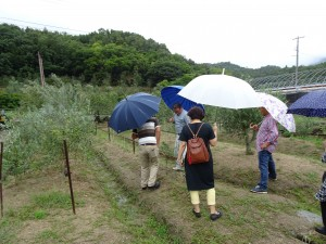 オリーブ農家のオリーブ農家によるオリーブ農家のためのワークグループ『オリーブ栽培/ビジネス研究会』