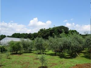 湘南オリーブ・ユニバーサル農場の四季