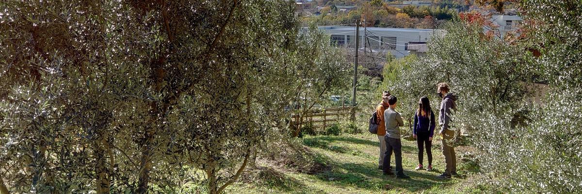 まつき農園『湘南オリーブの郷』
