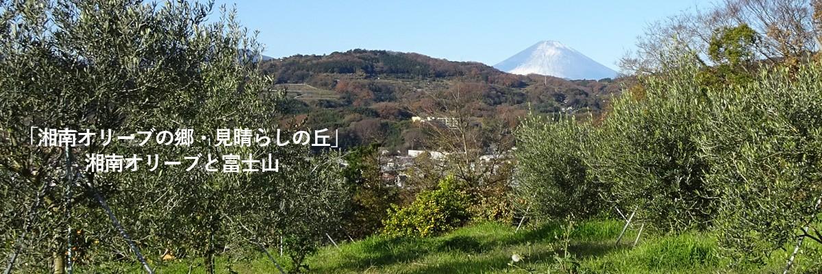 湘南オリーブと富士山