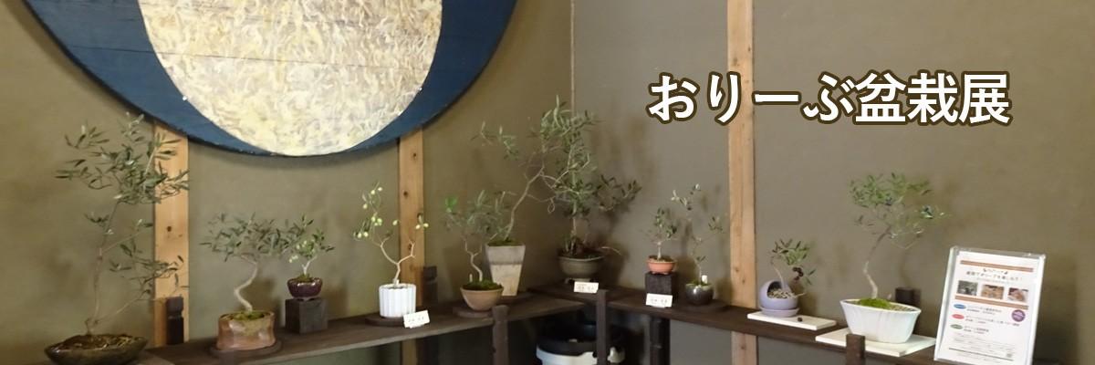 湘南オリーブの郷「おりーぶ盆栽展」