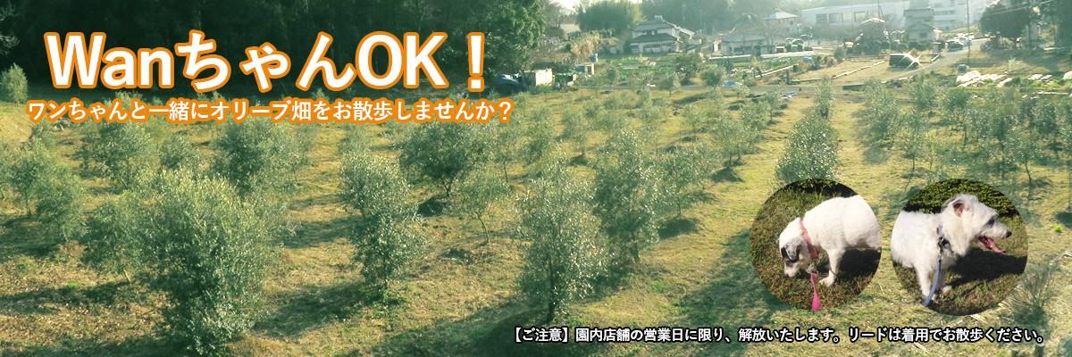 犬連れ歓迎!ワンちゃんと一緒に湘南のオリーブ畑をお散歩しませんか?