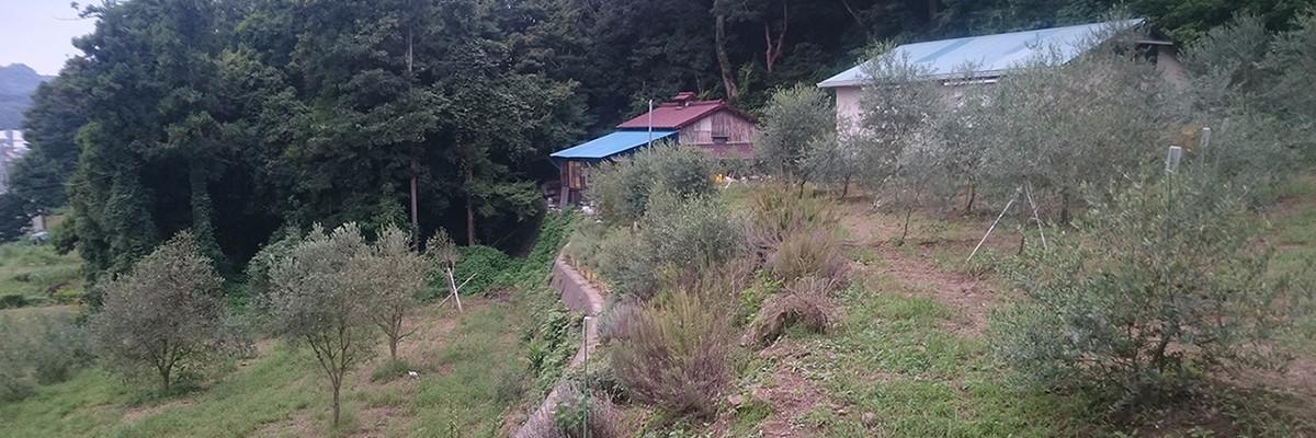 湘南オリーブの郷