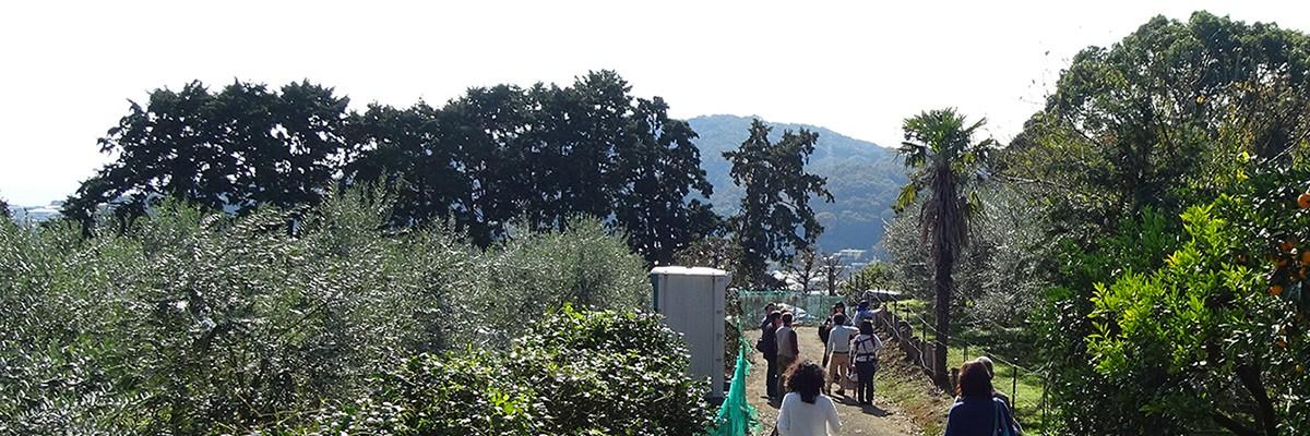 湘南オリーブ・二宮「ユニバーサル農場」メイン圃場へ向かう道