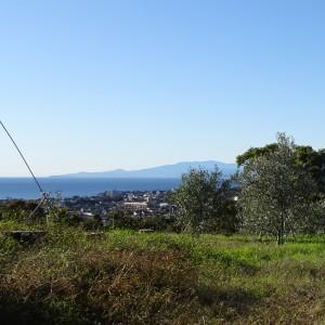 湘南オリーブの郷「見晴らしの丘」